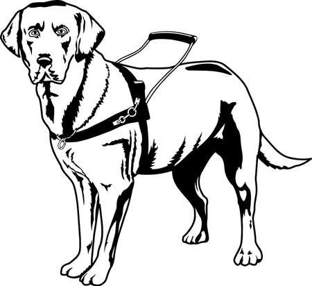 Guide Dog Illustration. 向量圖像