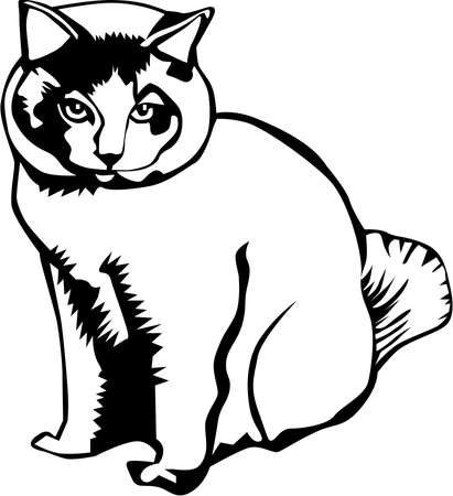 A Cat Illustration.