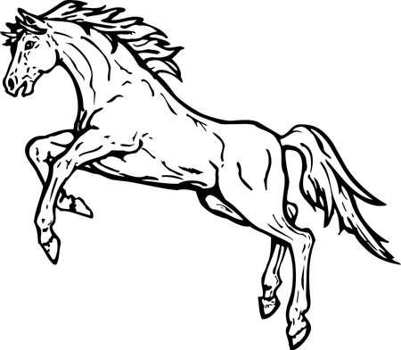 Horse Rearing Illustration.