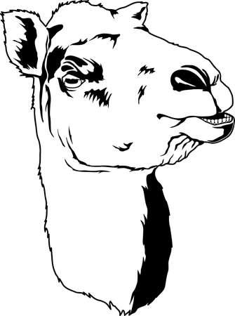 ラクダの顔イラスト
