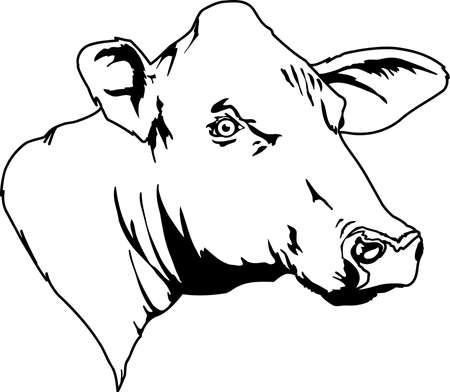 Koe hoofd illustratie