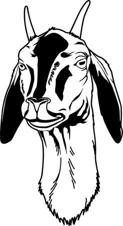 Goat Head Illustration