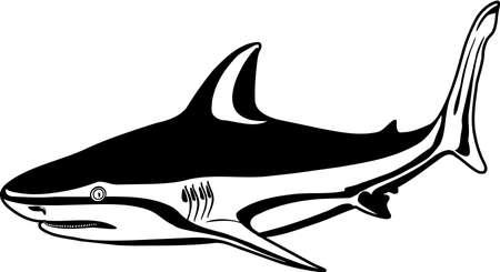 Bull Shark Illustration