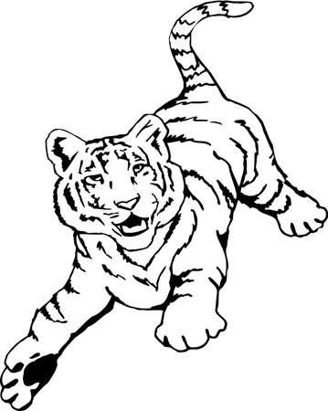 Tiger Illustration.