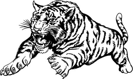 Tiger Attacking Illustration. Illustration