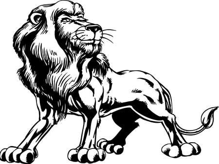 Lion Illustration Ilustração