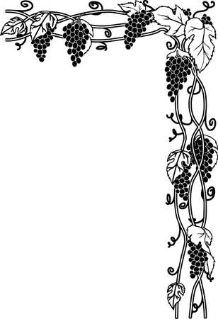 Black and white grape vines illustration