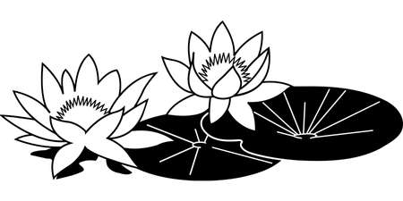 Water Lilies Illustration