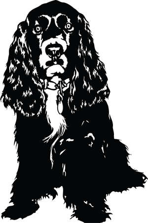 Cocker Spaniel Illustration