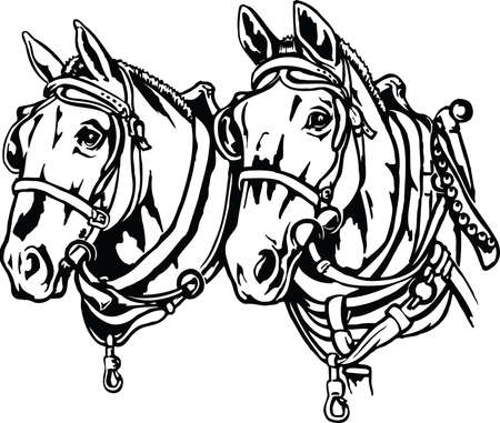 Draft Horses Illustration Çizim