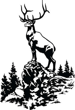 Elk Illustration