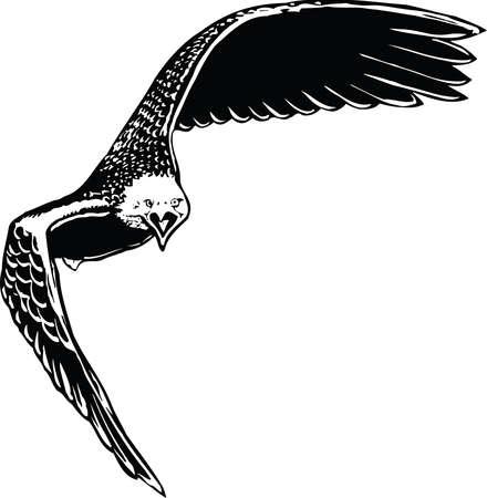 Eagle Tilted Illustration Ilustração