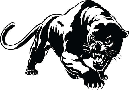 Panther Illustration