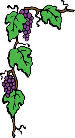Grape border corner illustration on white background.