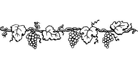 Ilustración de la frontera de uva sobre fondo blanco. Foto de archivo - 87523804