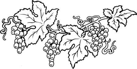 Vides de uva ilustración Foto de archivo - 87699315