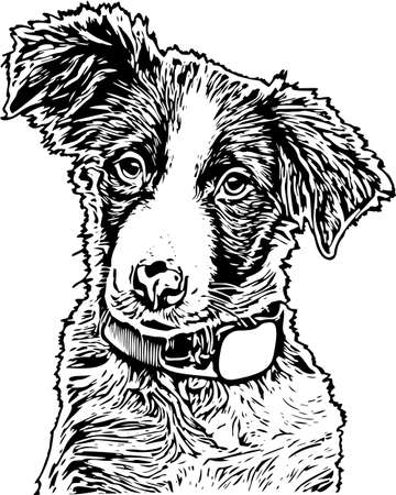 Vector Illustration of a Dog Reklamní fotografie - 121486051
