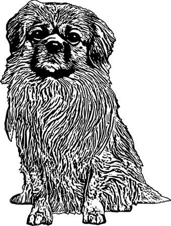 Vector Illustration of a Tibetan Spaniel 일러스트