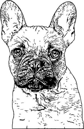 Vector Illustration of a French Bulldog Ilustrace