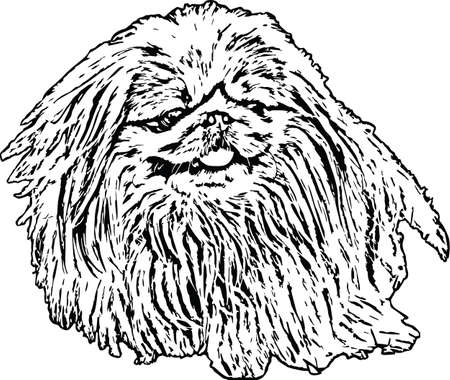 Vector Illustration of a Pekinese Dog