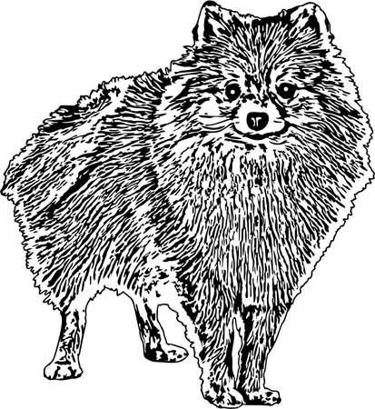 Illustration vectorielle d'un chien de Poméranie Vecteurs