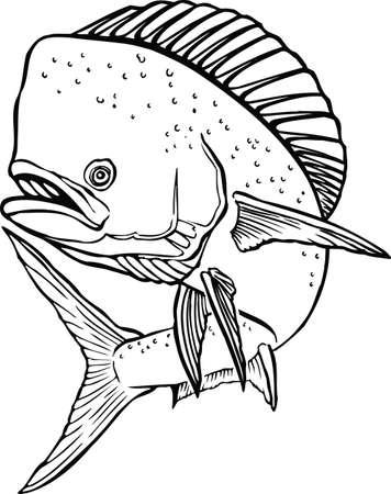 Dolphin Vector Illustration 向量圖像