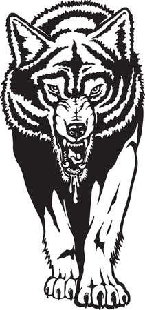 Gray Wolf Vector Illustration