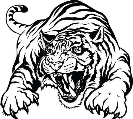 Illustrazione vettoriale di tigre arrabbiata Vettoriali