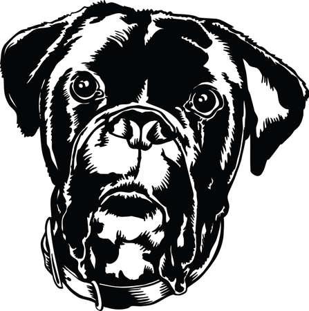Boxer Bulldog Mix Head Vector Illustration Banque d'images - 139734727