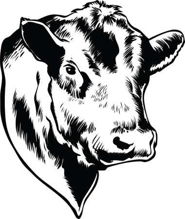 Bull Head Vector Illustration Banque d'images - 139735242