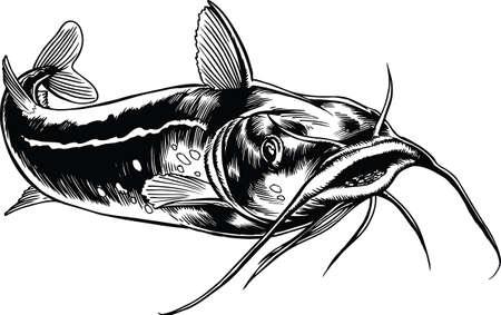 Illustration vectorielle de poisson-chat nageant