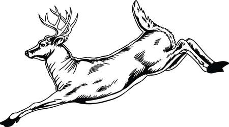 Deer Jumping Vector Illustration Banque d'images - 139731535