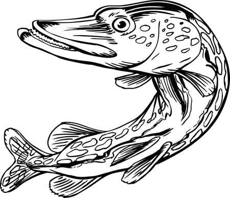 Illustration de vecteur de dessin animé de brochet du nord