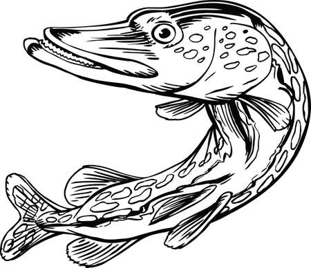 Northern Pike Cartoon Vector Illustration