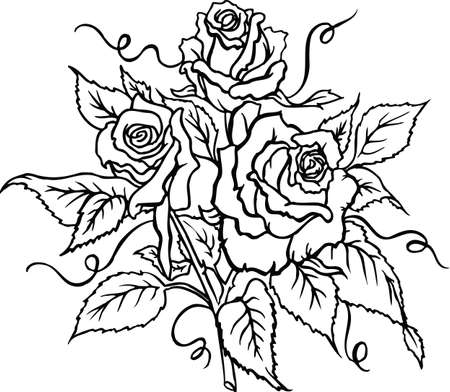 Roses Vector Illustration Banque d'images - 146583893