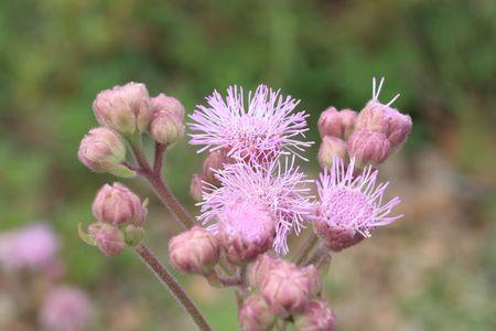 blumen: Purple flower in the field in summer.