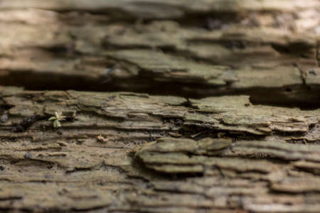 Wood texture transformed over the years into an original natural look Stok Fotoğraf - 107852814