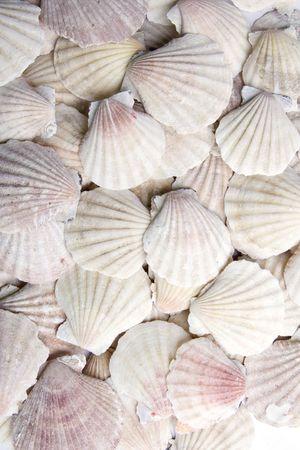 White scallops Stock Photo - 6592813