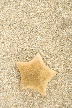 Starfish on sand photo