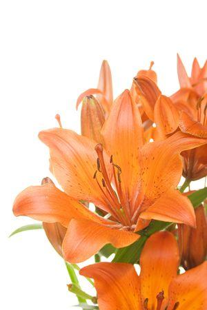 tiger lily: Orange lilies