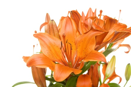 Flowers orange tiger lilies photo