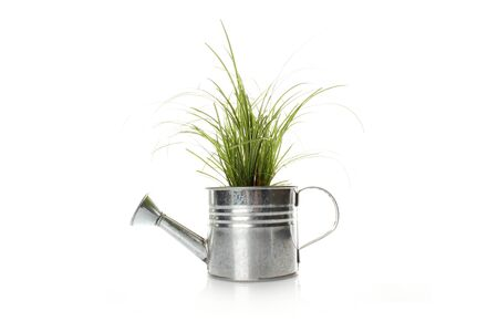 Watering with a green plant photo