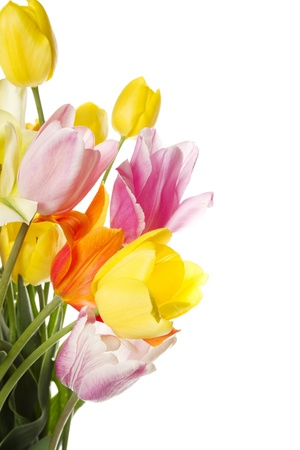 mother nature: Tulips Stock Photo