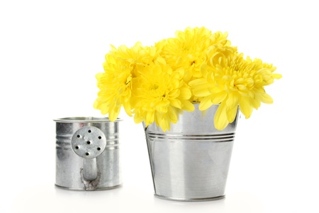 Yellow chrysanthemums in a pail photo