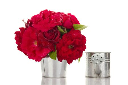 Red Roses in a pail photo