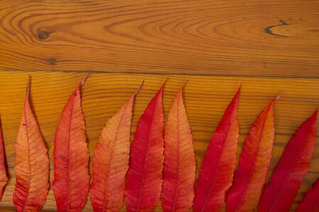 The wooden surface with autumn leaves photo