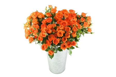 Bouquet of roses Standard-Bild