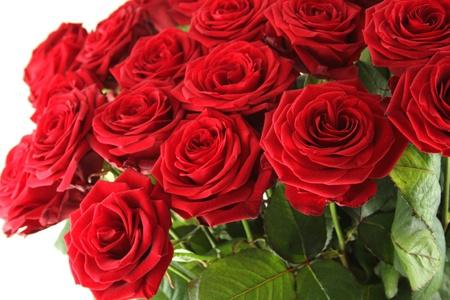 Red roses Standard-Bild