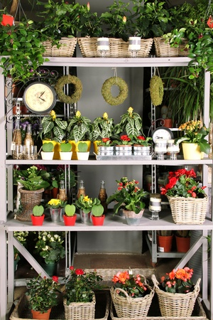 living thing: Shelves with goods