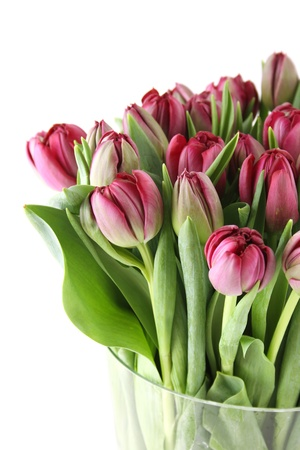 Tulips Bouquet Stock Photo - 13972311